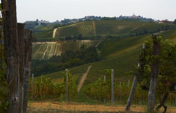 Adria Vini