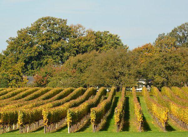 België wijn