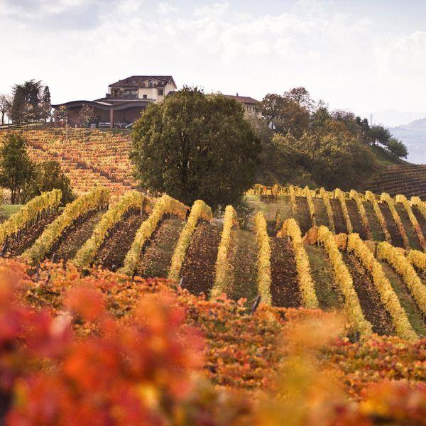 Il Cascinone winery