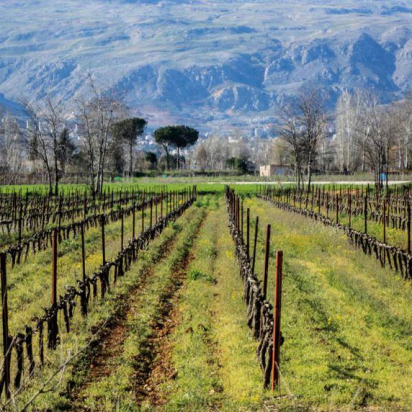 Libanon Wijn