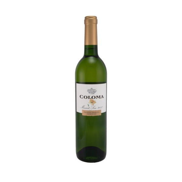 Coloma muscat